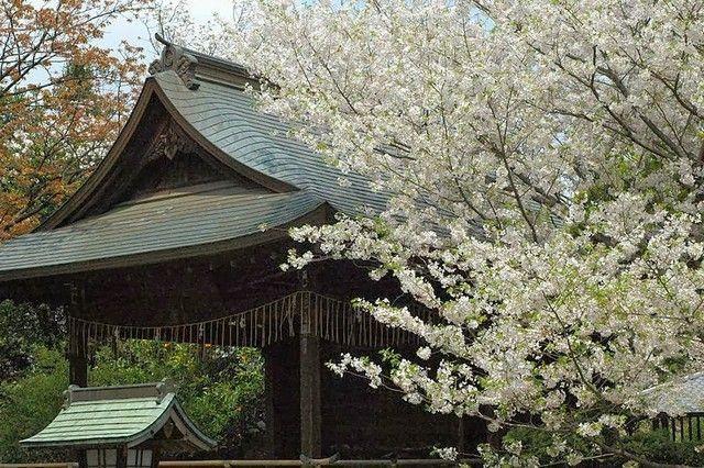 parque ueno tokio japon
