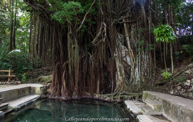 balete tree siquijor piscina