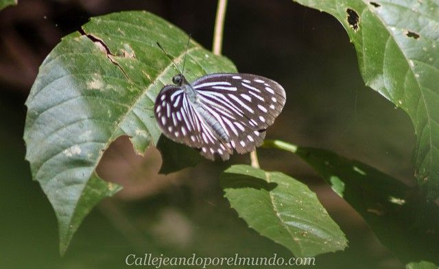 mariposa perhentian kecil malasia