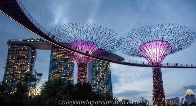 singapur-en-24-horas-gardens-by-the-bay-nocturno-2