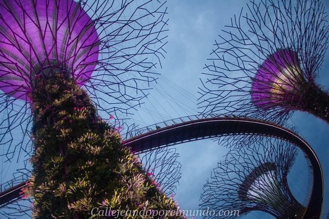 singapur-en-24-horas-gardens-by-the-bay-nocturno
