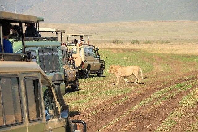 leon kenia y tanzania 2016