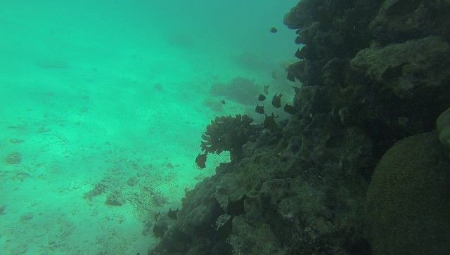fondos marinos kisite national park kenia (2)