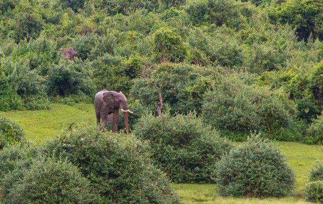 llegada de elefantes parque nacional aberdare kenia