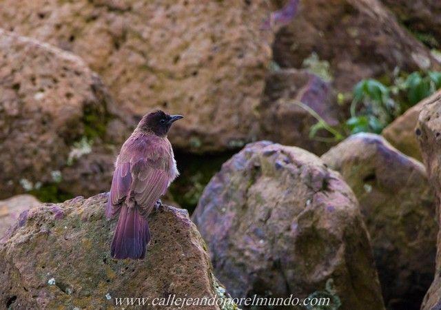 amanecer the ark aberdare national park kenia (3)