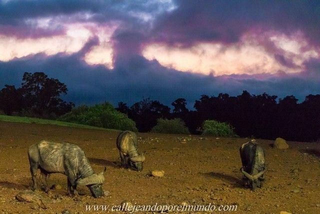 amanecer the ark aberdare national park kenia