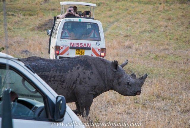 rinoceronte masai mara kenia (2)