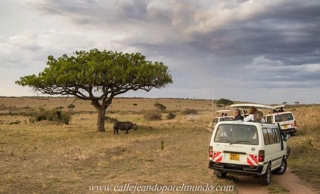 rinoceronte masai mara kenia (6)