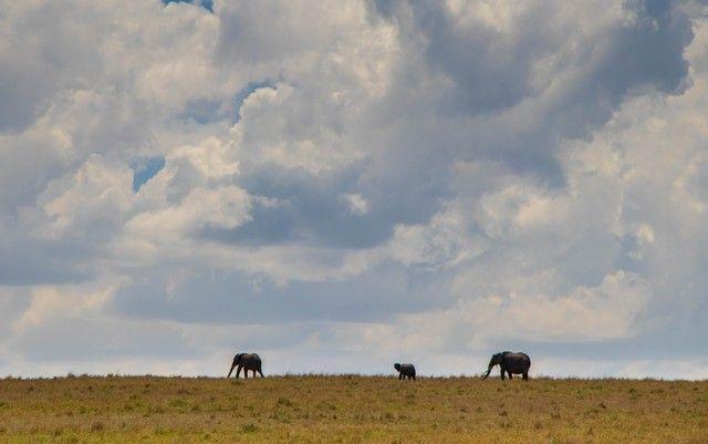 elefantes en masai mara kenia