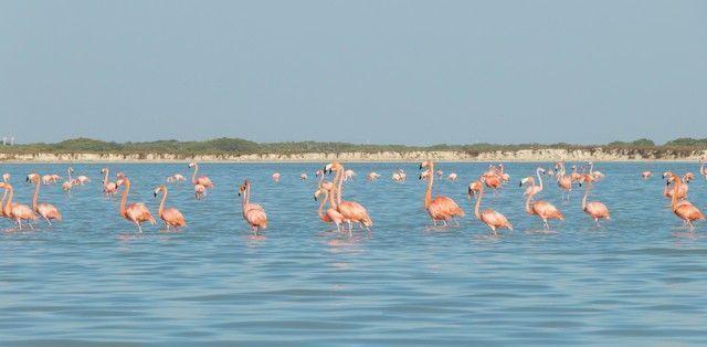 flamencos rosas rio lagartos (4)