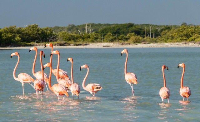 flamencos rosas rio lagartos yucatan 3