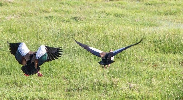 parque nacional amboseli kenia (10)