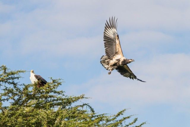 parque nacional amboseli kenia (11)