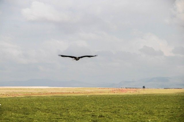 parque nacional amboseli kenia (12)