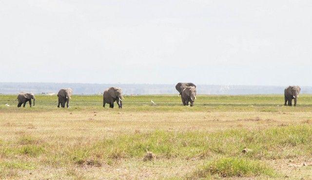 parque nacional amboseli kenia (27)