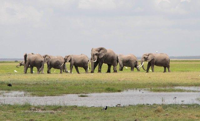 parque nacional amboseli kenia (29)