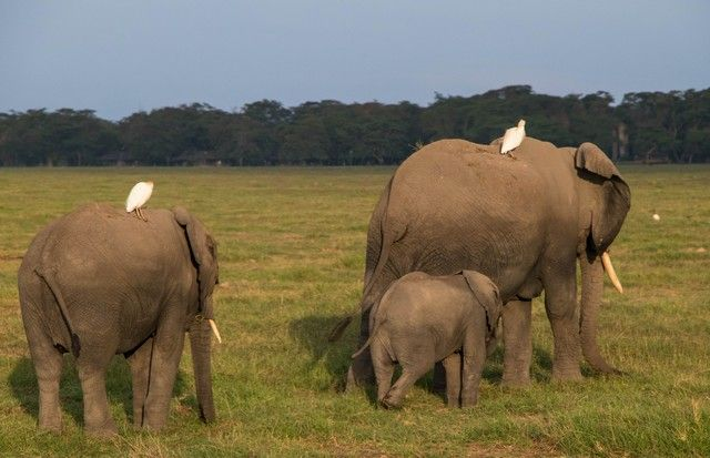 parque nacional amboseli kenia (4)