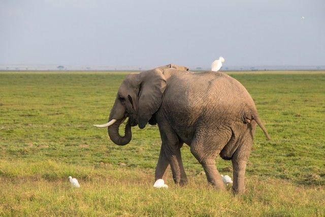 parque nacional amboseli kenia (6)