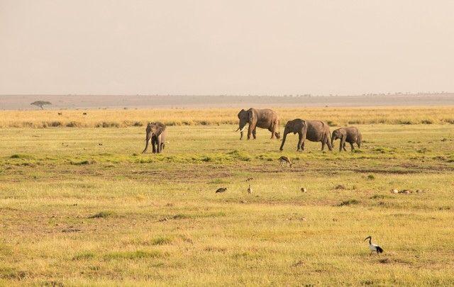 parque nacional amboseli kenia (8)