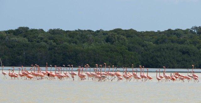 reserva biosfera ria celestún yucatan mexico (4)