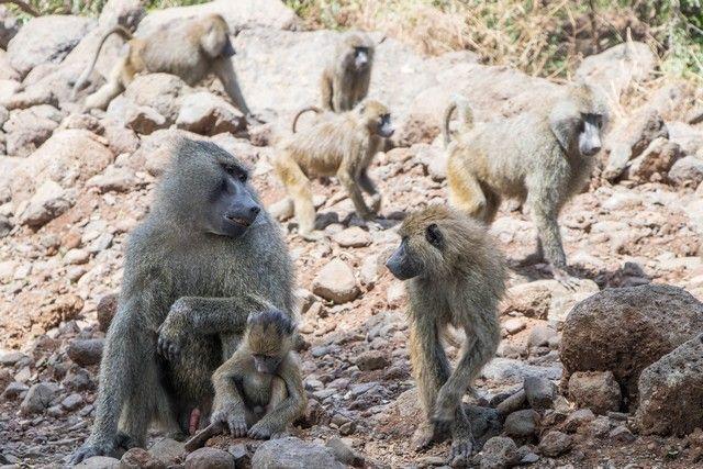 safari lago manyara tanzania (1)