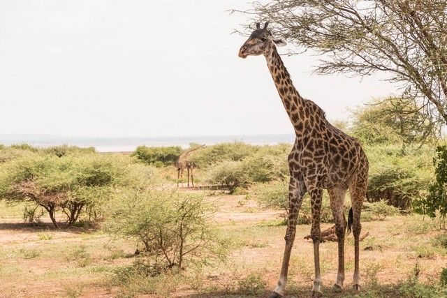 safari lago manyara tanzania (10)