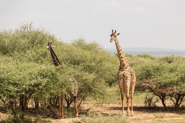 safari lago manyara tanzania (11)