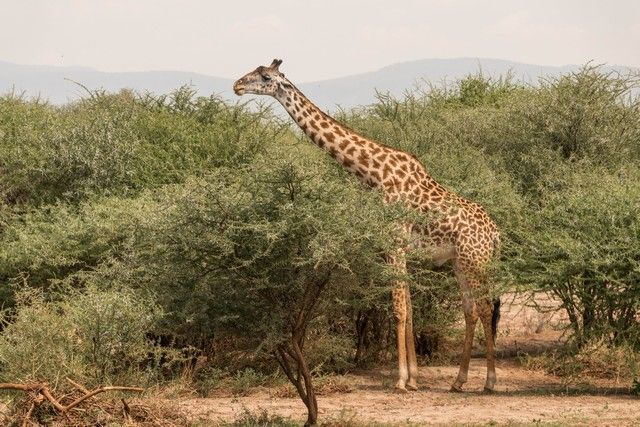 safari lago manyara tanzania (12)