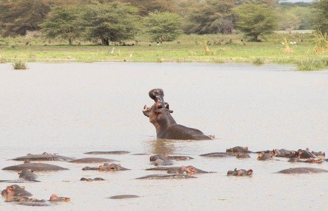 safari lago manyara tanzania (15)