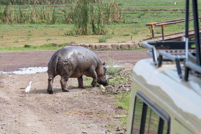 safari lago manyara tanzania (20)