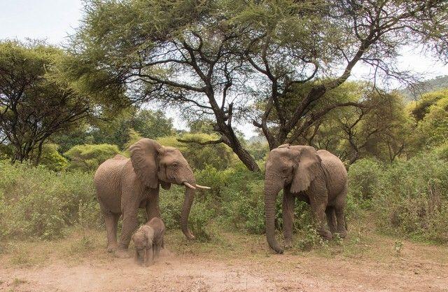 safari lago manyara tanzania (28)
