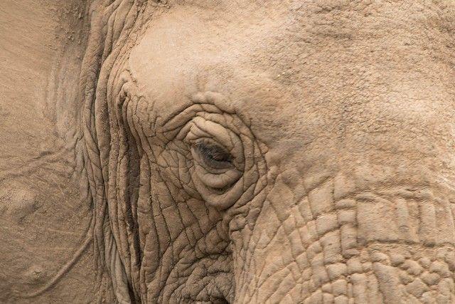 safari lago manyara tanzania (29)