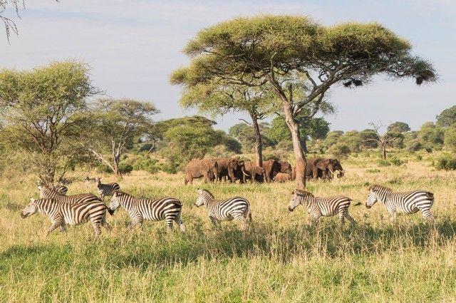 tarangire national park safari de mañana tanzania (7)