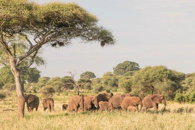 tarangire national park safari de mañana tanzania (8)