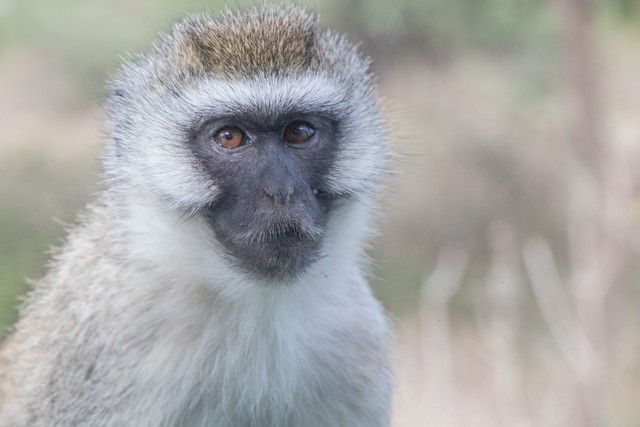 tarangire national park safari de mañana tanzania (9)