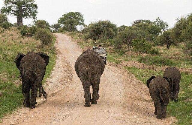 tarangire national park tanzania 11
