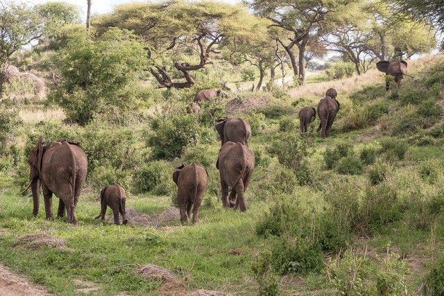 tarangire national park tanzania (12)