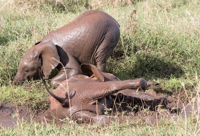 tarangire national park tanzania (16)