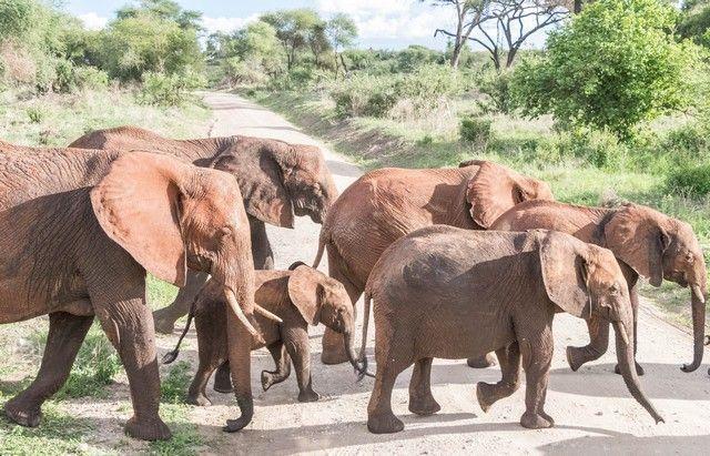 tarangire national park tanzania (18)