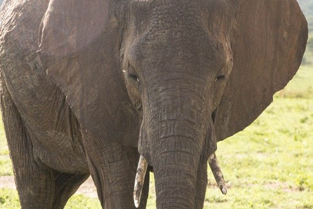 tarangire national park tanzania (20)