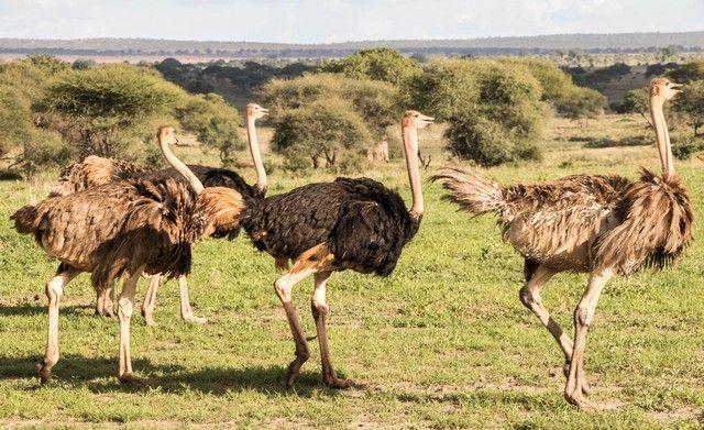 tarangire national park tanzania (21)