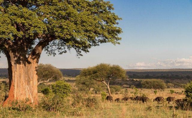 tarangire national park tanzania (23)