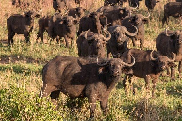 tarangire national park tanzania (24)