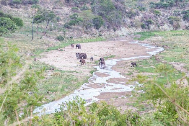 tarangire national park tanzania (4)