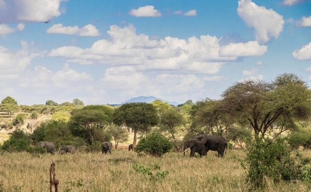tarangire national park tanzania (5)