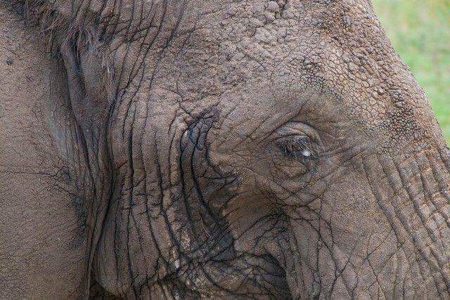 tarangire national park tanzania (8)