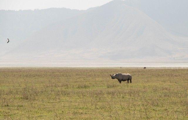 area de conservacion del ngorongoro tanzania (10)