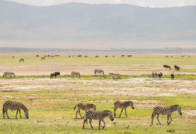area de conservacion del ngorongoro tanzania (12)