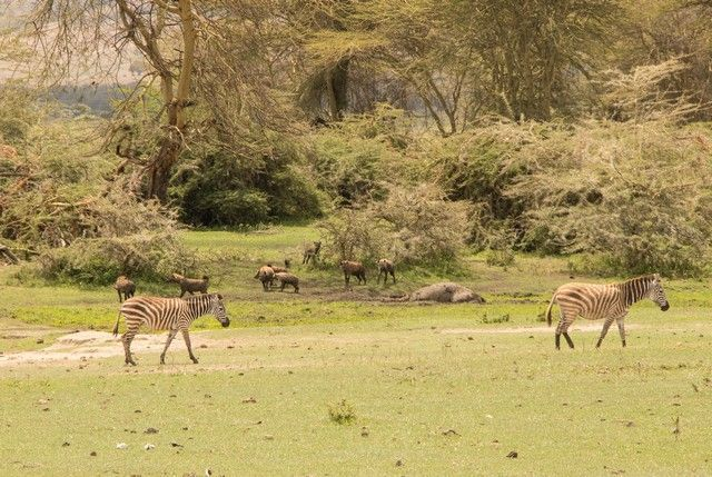 area de conservacion del ngorongoro tanzania (13)