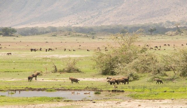 area de conservacion del ngorongoro tanzania (14)